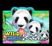 Wild Giant Panda joker123 สล็อต 1234 Joker